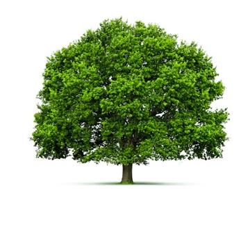Sebes e Árvores de Sombra